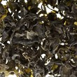 Dried seaweed kelp background — Stock Photo