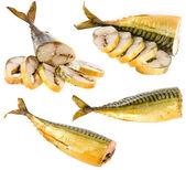 Smoked mackerel on white background — Stock Photo