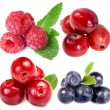 Collection of wild forest berries — Stock Photo #14403845