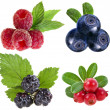 Collection of wild forest berries — Stock Photo #14403903