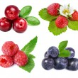 Collection of wild forest berries — Stock Photo #14403959