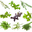Collection of fresh herbs — Stock Photo