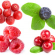 Collection of wild forest berries — Stock Photo #14404103