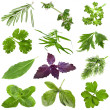 Collection of fresh herbs isolated on white background — Zdjęcie stockowe