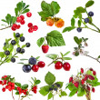 Collection of wild forest berries — Stock Photo #14404123