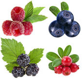Collection of wild forest berries — Stock Photo