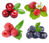 Collection of wild forest berries — Foto de Stock