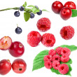 Collection of forest berries isolated on a white background — Stock Photo