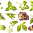Collection of fresh herbs and vegetables isolated on white background — Stock Photo