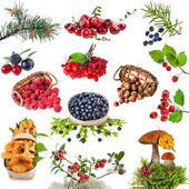 Collection of wild forest plants with berries, fruits, fungi, nuts — Stock Photo