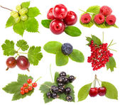 Collection of ripe berries — Stock Photo