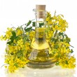 Flower of a rapeseed, Rape blossoms with bottle decanter oil, isolated on white background — Stock Photo #14462071