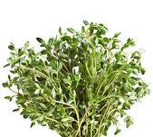 Fresh thyme herb isolated on white — Stock Photo