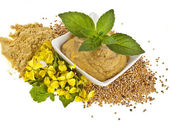 Mustard dish sauce and powder, seeds with mustard flower bloom on white — Photo