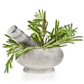Rosemary herb — Photo