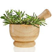 Fresh rosemary herb — Stock Photo