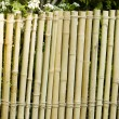 Bamboo wall — Stock Photo