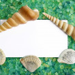 Card with seasalt and seashells with a place for your text — Stock Photo