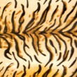 Royalty-Free Stock Photo: Tiger fur texture