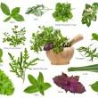 coleção de ervas frescas, isolada no fundo branco — Foto Stock