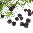 Branch of juniper with berries isolated on white — Stock Photo #14478633