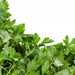 Cilantro coriander isolated on white — Stock Photo