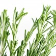 Rosemary herb isolated on white background — Stok fotoğraf