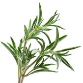 Savory herb isolated on white background — Stock Photo