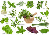 Fresh herbs collection isolated on white background — Stock Photo