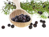 Branch of juniper with berries in the wooden spoon, isolated on white — Stock Photo