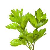 Green parsley leaves isolated on white background — Stock Photo