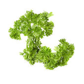 Kıvırcık maydanoz yaprak yeşil closeup beyaz zemin üzerine — Stok fotoğraf