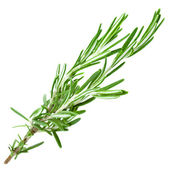 A sprig rosemary herb isolated on white background — Stock Photo