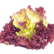 Red Curly Lettuce Leaves isolated - Stock Photo