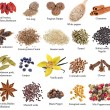 Set of spices with names — Stockfoto