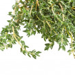 Thyme herb isolated on white background — Photo