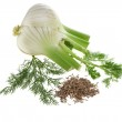 Fennel and dill isolated over white background — Stock Photo #14481989