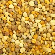Bee pollen background - Stock Photo