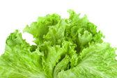 Fresh lettuce isolated on white background — Stock Photo