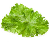 Fresh lettuce isolated on white background — Foto Stock