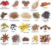 Conjunto de especiarias com nomes — Foto Stock
