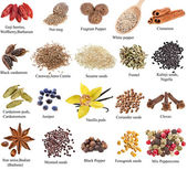 Set of spices with names — Stock fotografie