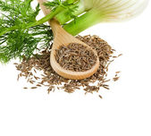 Fennel and dill isolated over white background — Stock Photo