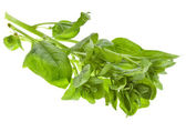 Fresh spinach leaves isolated on white — Stock Photo