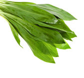 Wild ramson fresh leaves — Foto Stock