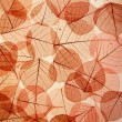 Backdrop texture of colorful floral leaves - 图库照片