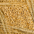 Seeds and barley grains — Stock Photo