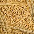 Seeds and barley grains - Stock Photo