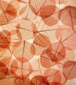 Backdrop texture of colorful floral leaves — Stock Photo