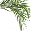 Palm leaves isolated on white — Stock Photo #14871703